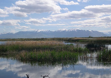 Wetlands Have Been Defined In Different Ways By Numerous Enies And Agencies However The United States Army Corps Of Engineers Corps And The United